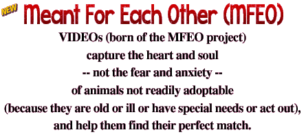 Meant For Each Other (MFEO). These are videos (born of the MFEO project). I created them to capture the heart and soul, not the fear and anxiety, of animals who aren't readily adoptable because they are old or ill or have special needs or act out—this, to help them find their perfect match.